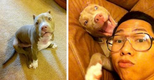 Junge findet seinen entführten Hund und reist mehr als 1000 Kilometer, um ihn zu retten