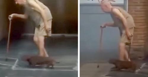 Dackel geht im langsamen Tempo seines älteren Herrchens: ein Beweis für große Loyalität