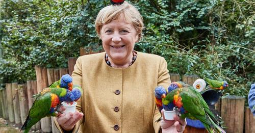 Kein Photoshop: Angela Merkel besucht Vogelpark – und produziert grandiose Fotos mit Sittichen und Papageien