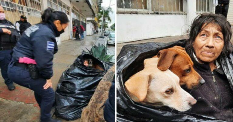 65-Jährige lebt in Mülltüte, um Hunde nicht im Stich zu lassen