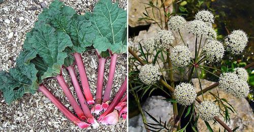 7 heimische Pflanzen, die überraschend giftig sind