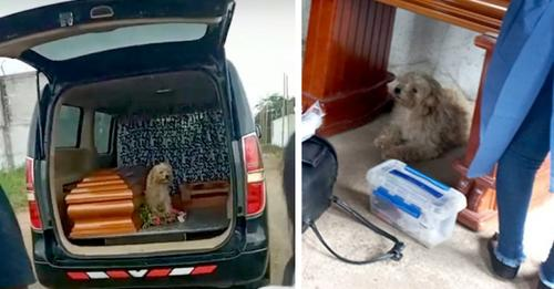 Hund weigert sich, den Sarg seiner Besitzerin am Tag ihrer Beerdigung zu verlassen