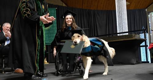 Begleithund hilft Besitzerin durchs Studium und bekommt eigenen Abschluss verliehen