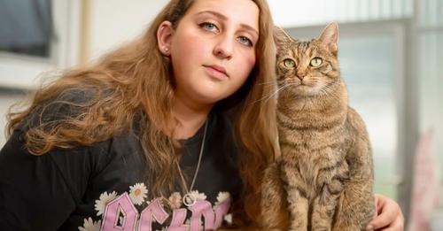 VON KATZENHASSER BESCHOSSEN Katze Cleo überlebte 37 Schrotkugeln