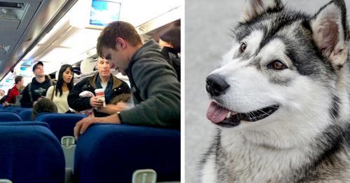 Der Begleithund steigt ins Flugzeug, um seinem Herrchen beizustehen: Sein Verhalten an Bord ist überraschend
