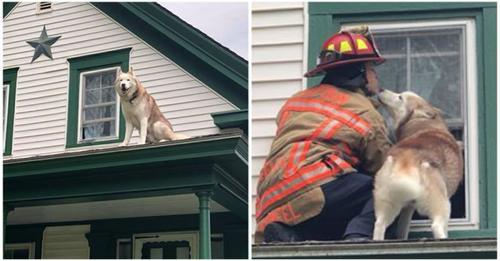 Hund dankt Feuerwehrmann für seine Rettung mit Küsschen