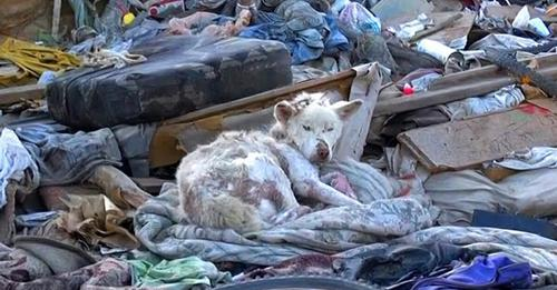 Heimatlose Hündin wird von Tierschützern auf einer Müllkippe entdeckt – hatte sich mit Leben wohl abgefunden