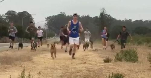 Highschool Laufteam nimmt Hunde aus dem örtlichen Tierheim mit auf ihre Morgenrunde