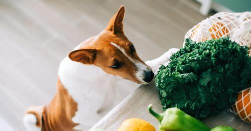 20.000 Pfund Strafe bei vegetarischer Ernährung von Hunden